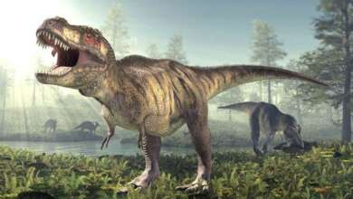 Photo of डायनासोर का इतिहास, जीवन और उनसे जुड़े 35 रोचक तथ्य