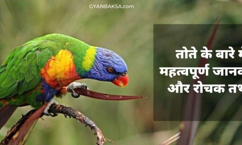 Photo of तोते के बारे में महत्वपूर्ण जानकारी और 11 रोचक तथ्य