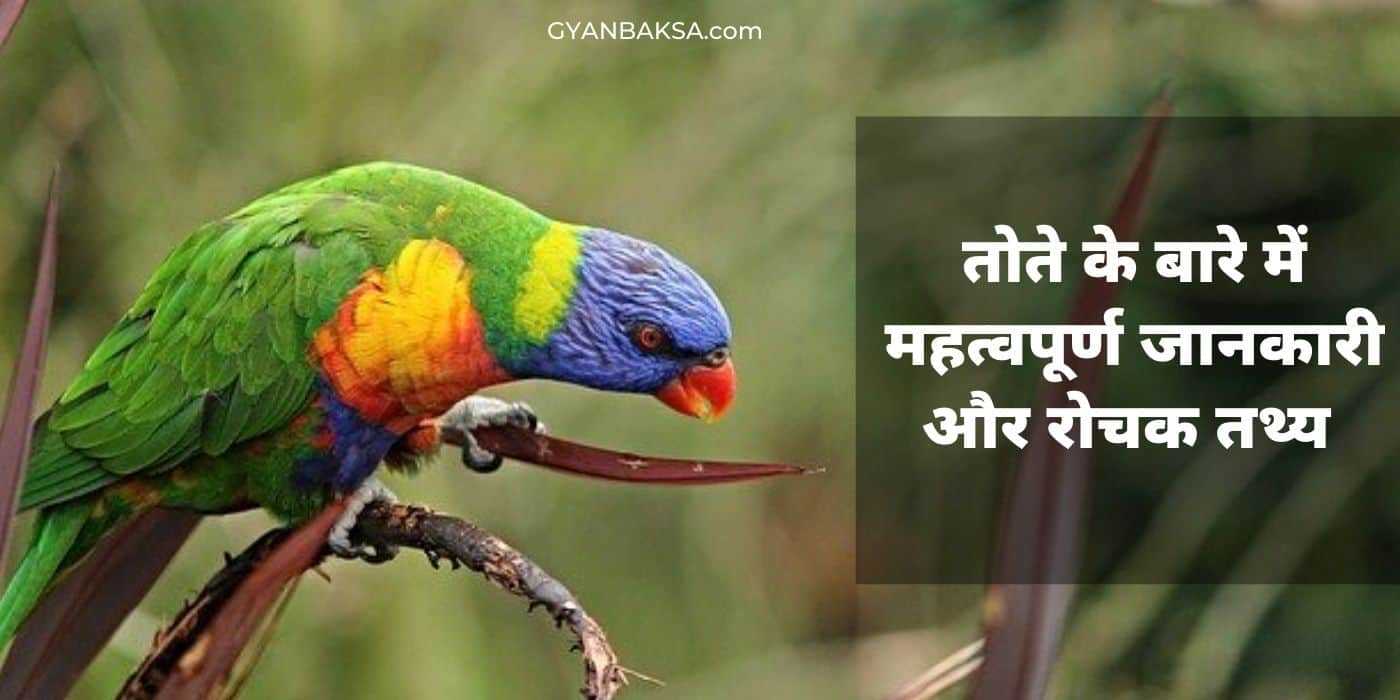 facts about parrot in hindi