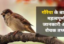 Everything About sparrow in Hindi