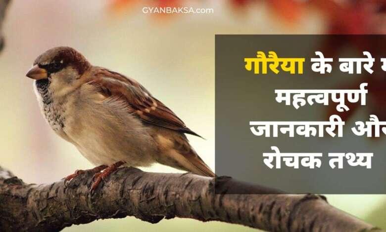 Photo of गौरैया चिड़िया महत्वपूर्ण जानकारी, रोचक तथ्य और विशेषताएं