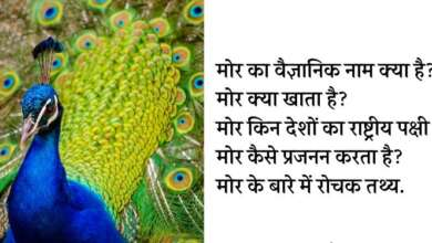 Everything about peacock in hindi
