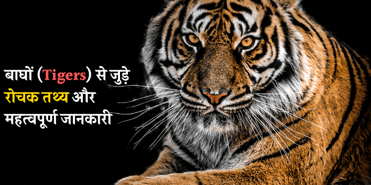 Tiger info in Hindi