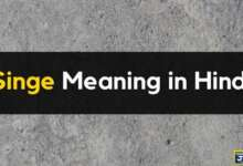 Meaning of Singe in Hindi