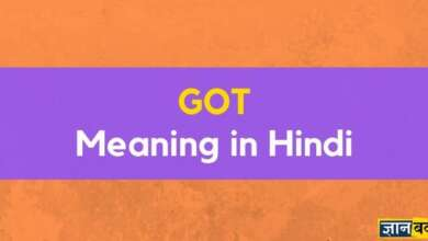 Meaning of Got in Hindi