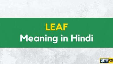 Meaning of leaf in hindi